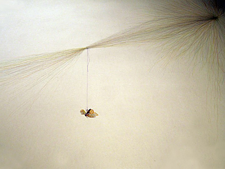 Franny-Swan-Conundrum-moth