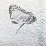Franny-Swann-memorial-moth-2