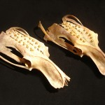 Franny-Swann-pistols-and-pollinators-skulls